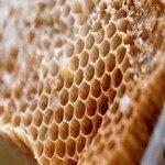 1147975_honeycomb_4