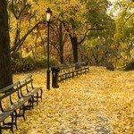 917236_autumn_in_new_york_3