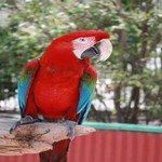 1176717_parrot_