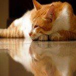 692227_sleeping_beauty