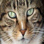 1291261_cat_face