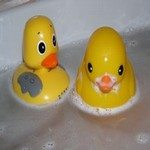701261_ducks_2