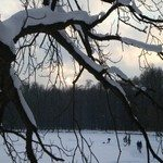 1271641_cold_winter_afternoon