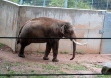 Pražská zoo 1