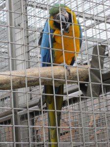 papouščí zoo  1