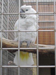 papouščí zoo  2