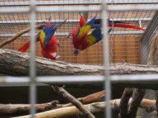 papouščí zoo  3