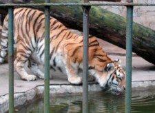 zoo ostrava 3