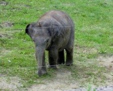 zoo ostrava 4