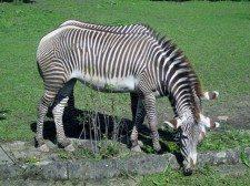 zoo ostrava 7