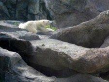 zoo vídeň 3