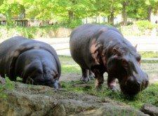 zoo vídeň 4