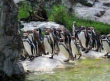 zoo vídeň 5