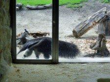 zoo vídeň 6
