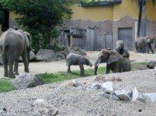 zoo vídeň 7