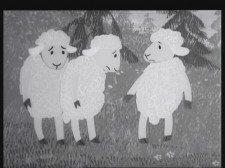 ovci_babi2