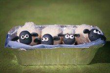 Flock as lambs.