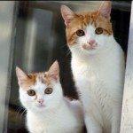 619434_lovely_kittens_2